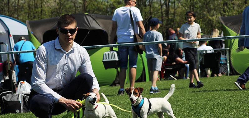 Krajowa Wystawa Psów Rasowych - Jasło 2018 - Jack Russell Terrier