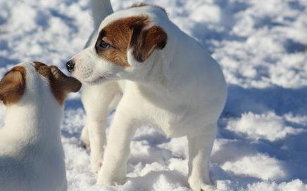 """Pierwszy śnieg szczeniaczków z miotu """"N"""""""