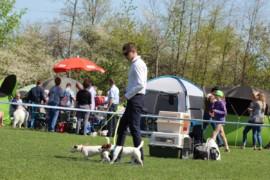 Krajowa Wystawa Psów Rasowych - Jasło 2018 - Jack Russell Terrier (17)