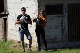 Jacks4You Majówka, Jack Russell Terrier (57)