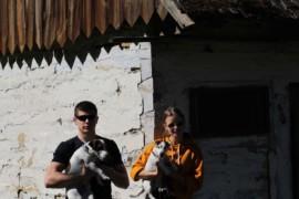 Jacks4You Majówka, Jack Russell Terrier (59)