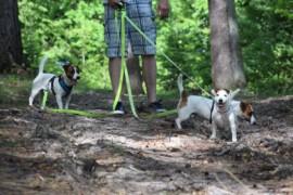Jacks4You Majówka, Jack Russell Terrier (9)